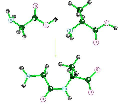 Peptide bond  Wikipedia